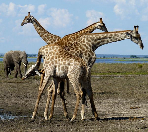 Chutes Victoria, Chobe River Front, Khwai & Moremi, Delta de l'Okavango et option Kalahari