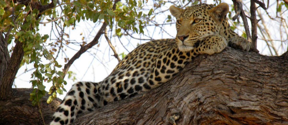 Chutes Victoria, Chobe River Front, Savuti, Khwai, Moremi et Delta de l'Okavango