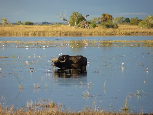 Le Chobe National Park