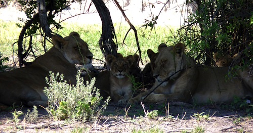 Le Central Kalahari Game Reserve