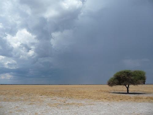 Le Central Kalahari Game Reserve